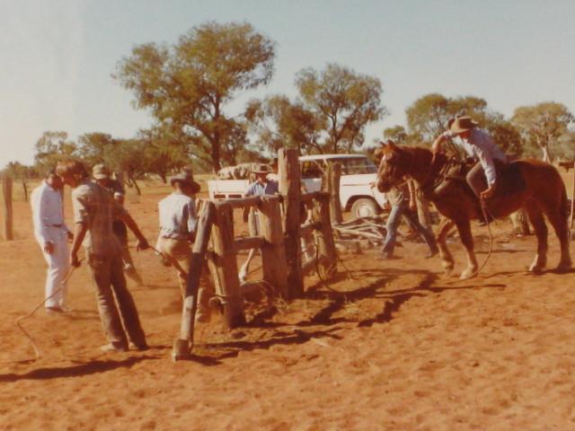 Bronco Branding Ooratippra Station  1983